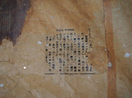 nijiiroさんの動物図譜シリーズ_b0322280_21473362.jpg
