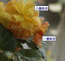 f0166982_22541726.jpg