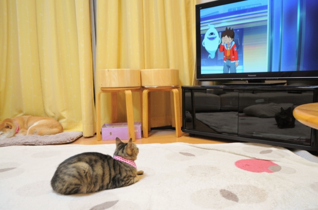 銀ちゃんも好きなアニメ_a0126590_23112493.jpg