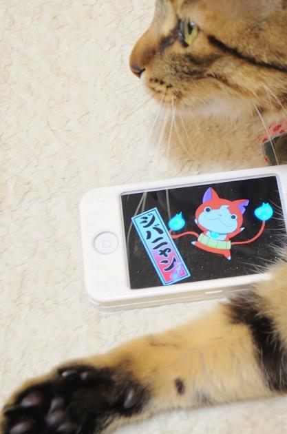 銀ちゃんも好きなアニメ_a0126590_23124184.jpg