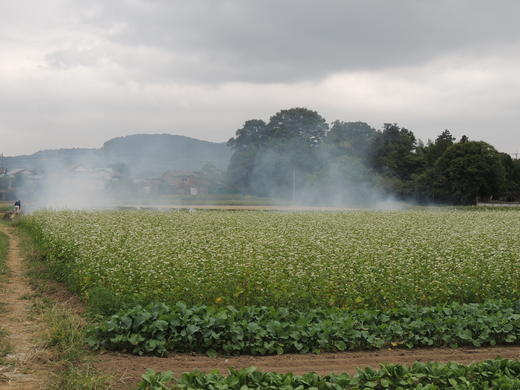 蕎麦畑&オープンスペース・・。_d0286718_22544051.jpg