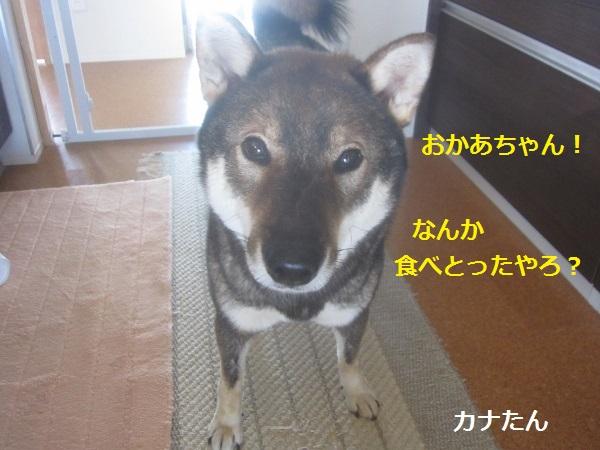 f0143123_2114732.jpg