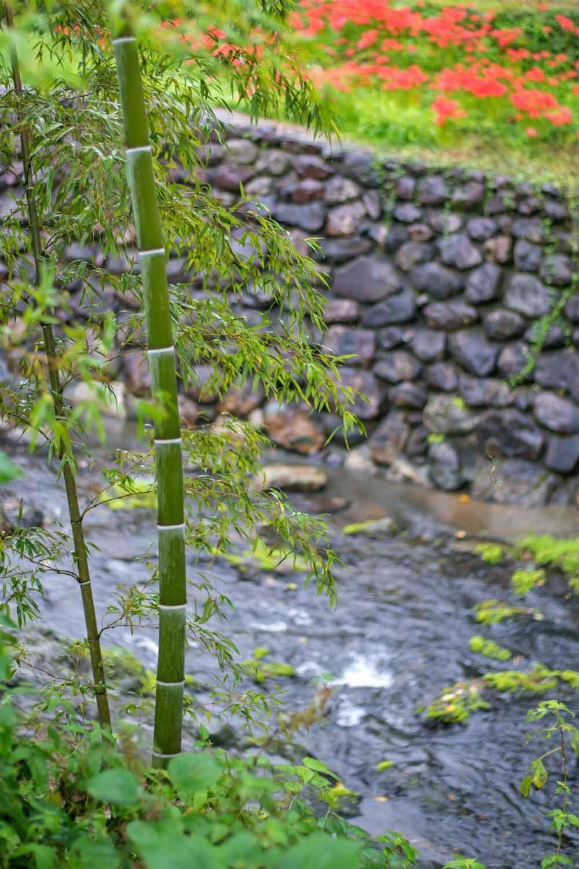 雨の彼岸花③(美里町)_d0238245_11224768.jpg
