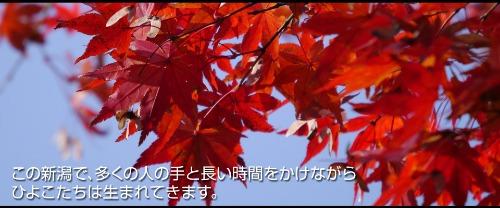 トップページの写真を更新しました!_e0266363_15254049.jpg