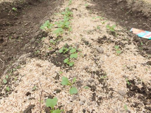 畑が賑わってきました_d0251679_2318142.jpg