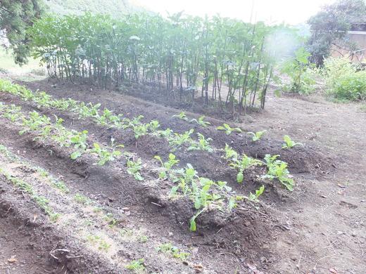 畑が賑わってきました_d0251679_2324944.jpg