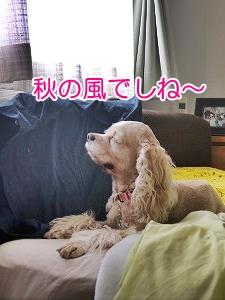 f0326925_00121197.jpg