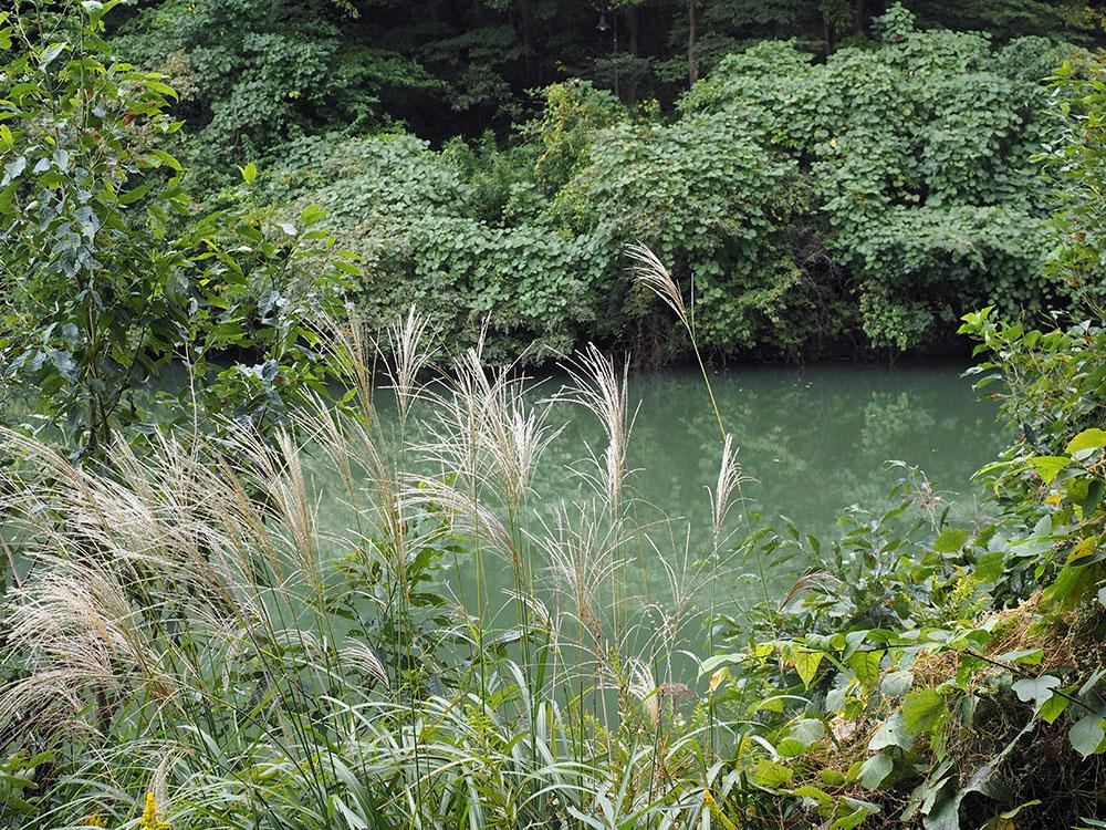 多摩方面でアサギマダラとトンボ撮影_f0324026_19514870.jpg