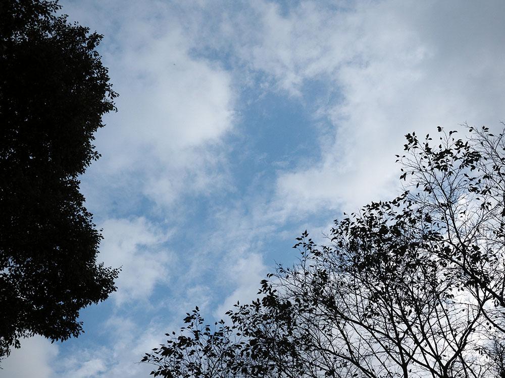 多摩方面でアサギマダラとトンボ撮影_f0324026_207065.jpg