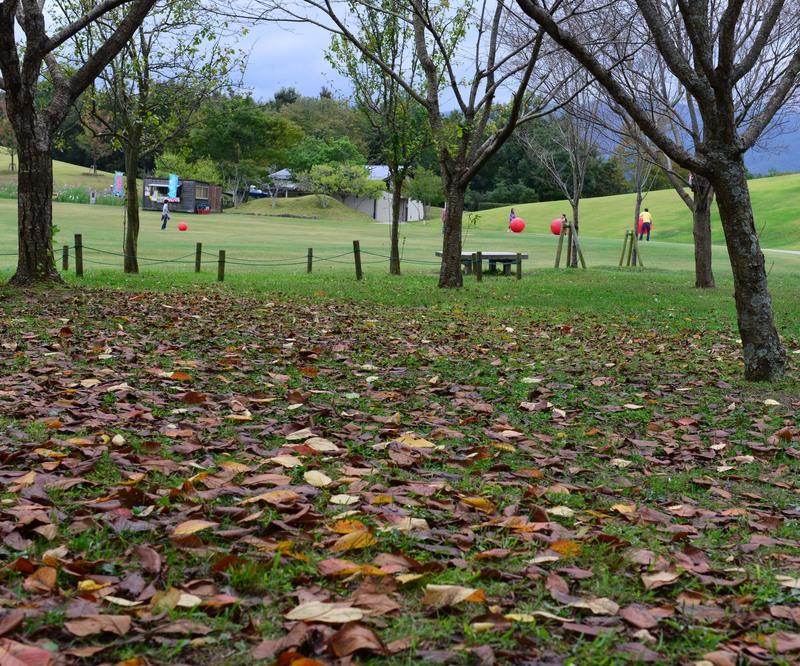 公園には 秋が・・・・・・_d0246136_23483560.jpg
