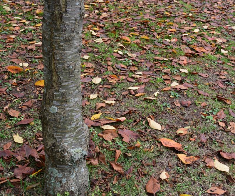 公園には 秋が・・・・・・_d0246136_2349587.jpg