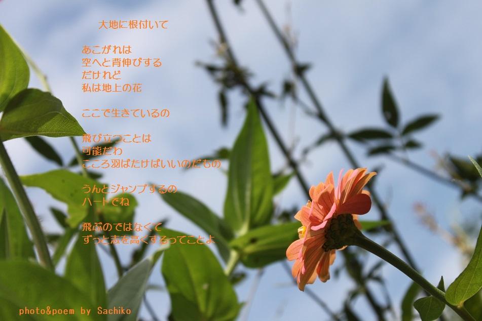 f0351844_11032270.jpg