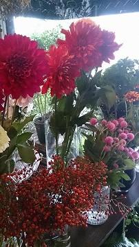 秋のお花たくさん_e0130779_1331411.jpg