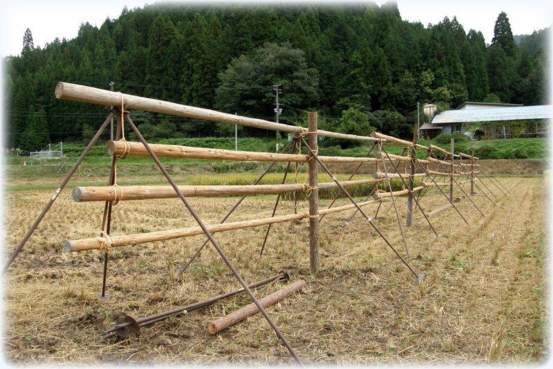 稲刈りの準備~~~_c0057390_22233956.jpg