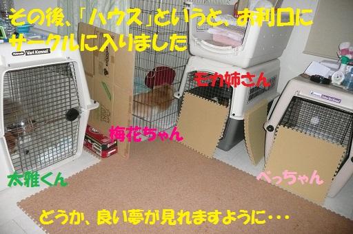 f0121712_2316102.jpg