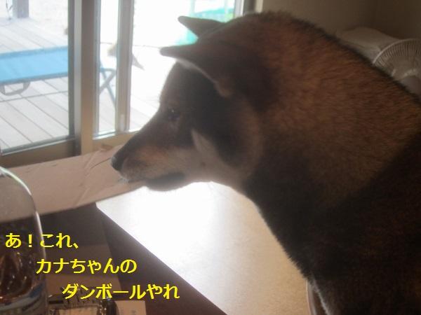 f0143123_2024523.jpg
