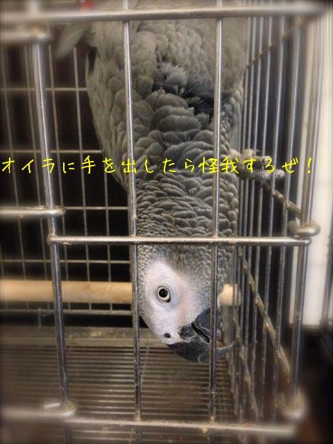 f0177261_1622253.jpg