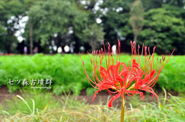 竹田市/七ツ森古墳群2014/彼岸花①_f0234062_21552051.jpg