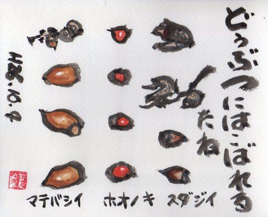 ホオノキ・マテバシイ・シダジイ_e0232277_1137353.jpg