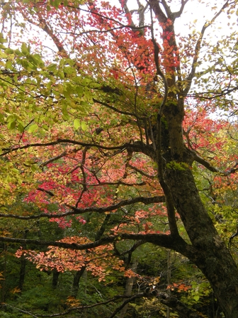 櫃取湿原は秋の終わり。_b0206037_20192775.jpg