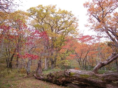 櫃取湿原は秋の終わり。_b0206037_20200375.jpg