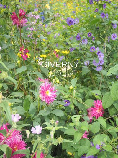 モネのGivernyへ_e0158653_18514872.jpg