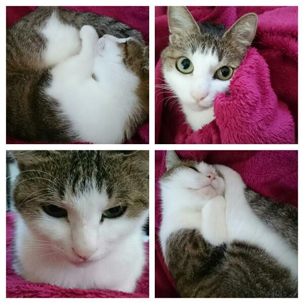 猫は毛布でまるくなる~♪_b0328361_19242795.jpg