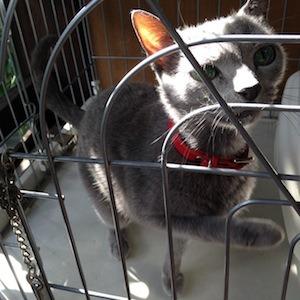 引越ちうの猫たち_b0199526_13513310.jpg