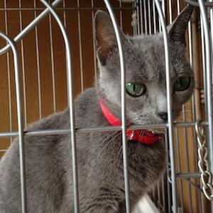 引越ちうの猫たち_b0199526_13515195.jpg