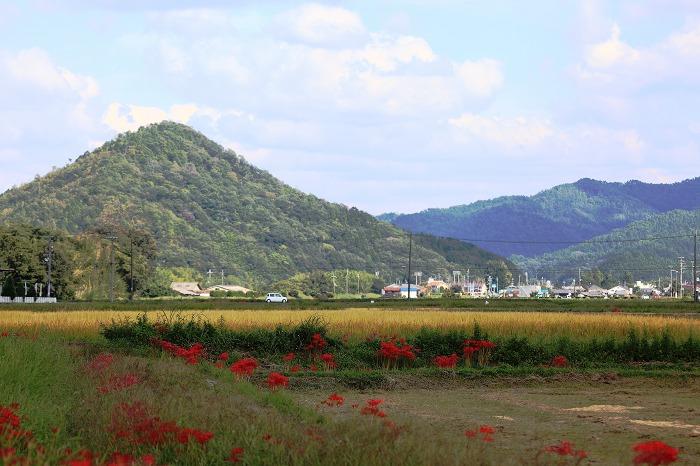 彼岸花と秋の空_a0294534_20132566.jpg