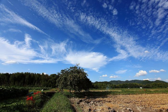 彼岸花と秋の空_a0294534_20212888.jpg