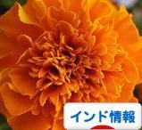 c0339249_00564171.jpg