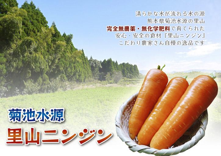 菊池水源里山ニンジン 無農薬・無化学肥料で育てたニンジンを今年も11月下旬より販売します!!_a0254656_1704516.jpg