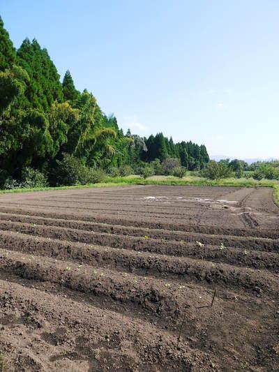 菊池水源里山ニンジン 無農薬・無化学肥料で育てたニンジンを今年も11月下旬より販売します!!_a0254656_1750619.jpg