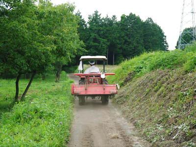 菊池水源里山ニンジン 無農薬・無化学肥料で育てたニンジンを今年も11月下旬より販売します!!_a0254656_18274968.jpg