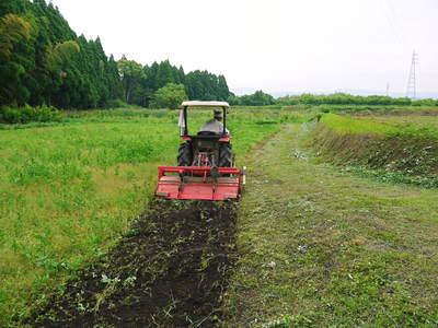 菊池水源里山ニンジン 無農薬・無化学肥料で育てたニンジンを今年も11月下旬より販売します!!_a0254656_18295820.jpg