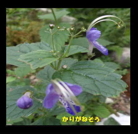 f0154564_8282642.jpg