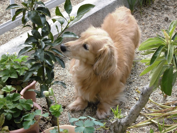 犬も花粉症!_a0082865_0573638.jpg