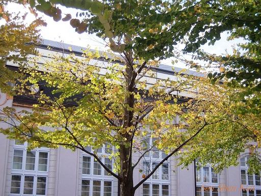 美術の秋(岡崎公園界隈) 2014年10月7日_a0164068_14202120.jpg