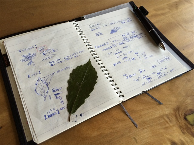 緑薫るノート_f0207410_11351128.jpg
