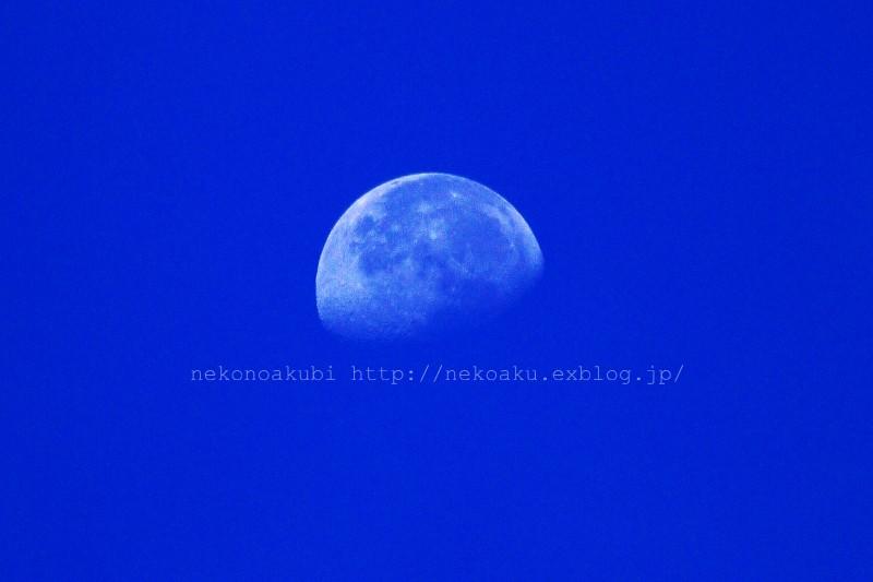 b0003512_130059.jpg