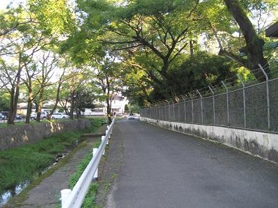 水前寺江津湖公園_b0228113_17522523.jpg