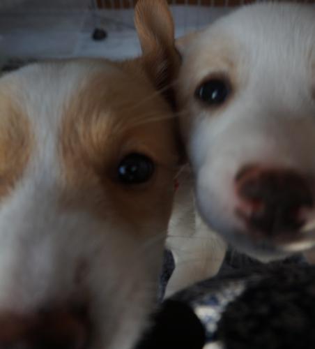 THE 子犬_b0207320_17305066.jpg