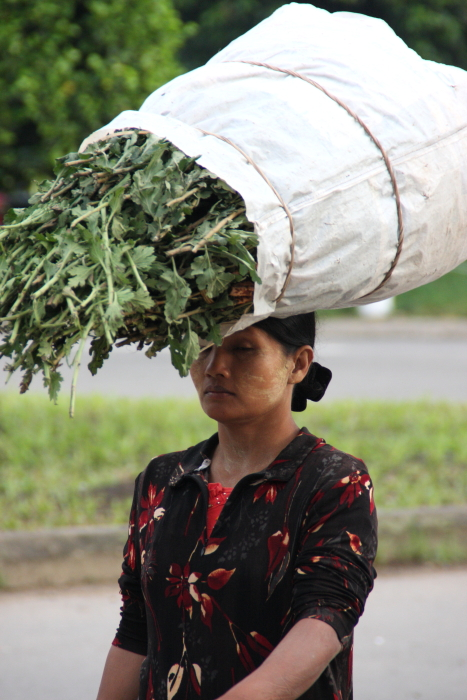 ミャンマーの人々02・・・白髭_d0138130_17262061.jpg