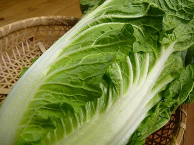 夢白菜 今年も元気な土に定植しました。「大山ファーム」さんの夢ブランドの野菜やスイカの話_a0254656_17185114.jpg