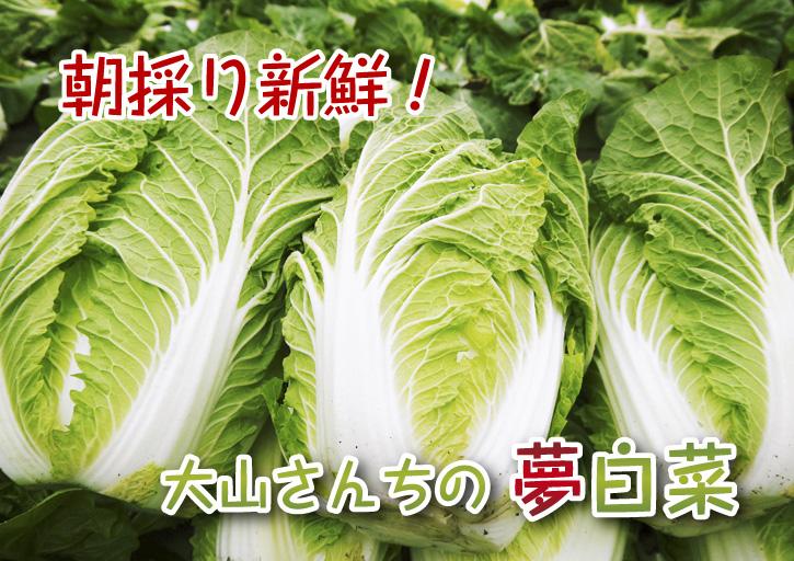 夢白菜 今年も元気な土に定植しました。「大山ファーム」さんの夢ブランドの野菜やスイカの話_a0254656_18462539.jpg