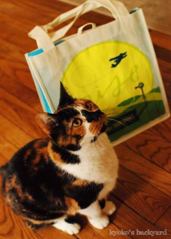 Whole Foodsのショッピングバッグ(とモデル猫)_b0253205_04301012.jpg