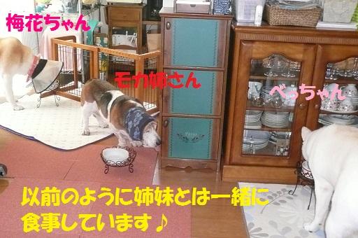 f0121712_7381377.jpg