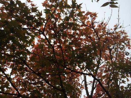 黄葉シーズン到来!_f0101226_06510575.jpg