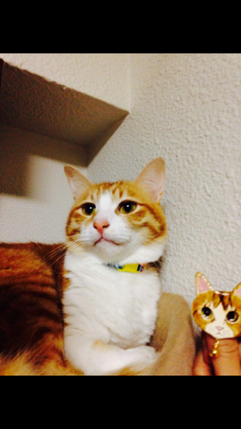 猫顔ブローチ&きみどりかえるさんの個展・西荻窪ニヒル牛2_a0137727_00030218.png